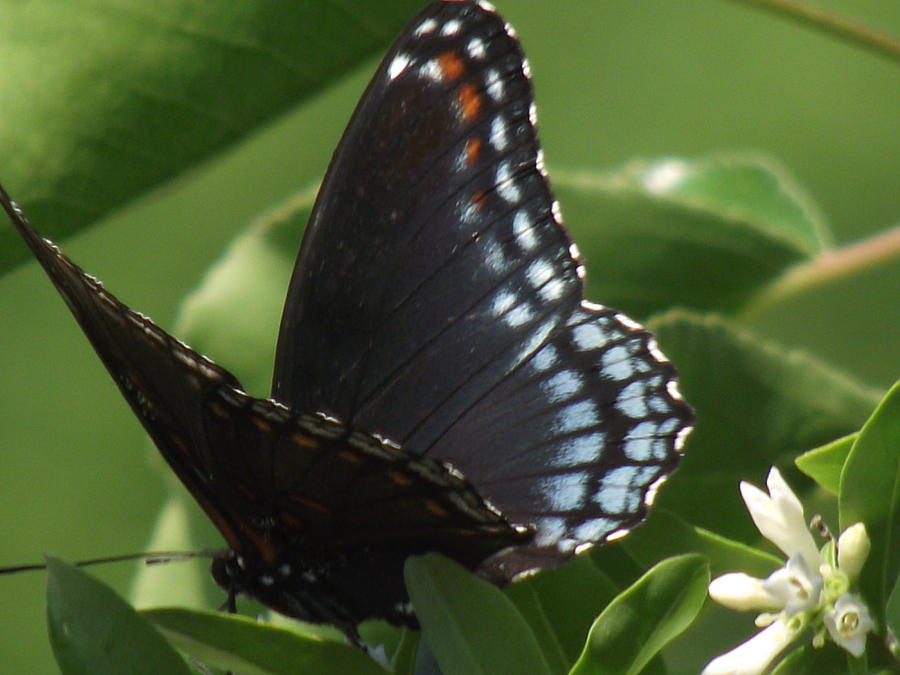 Butterfly Photograph - Butterfly by Katherine Woods