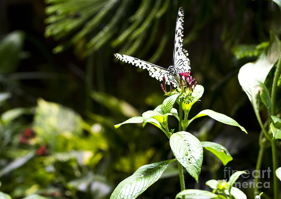 Butterfly Photograph - Butterfly Kisses by Leslie Leda