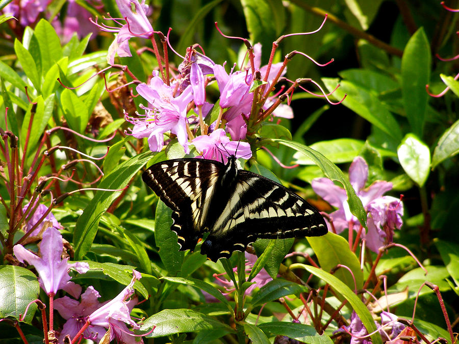 Wildlife Photograph - Butterfly On Flowers by Mark Caldwell