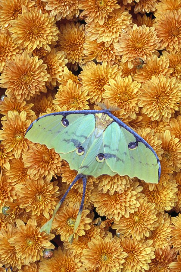 Animal Photograph - Butterfly On Flowers by Natural Selection Jeff Lepore