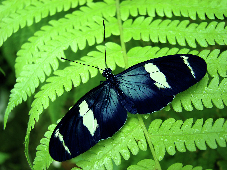Horizontal Photograph - Butterfly On Leaf. by Kryssia Campos