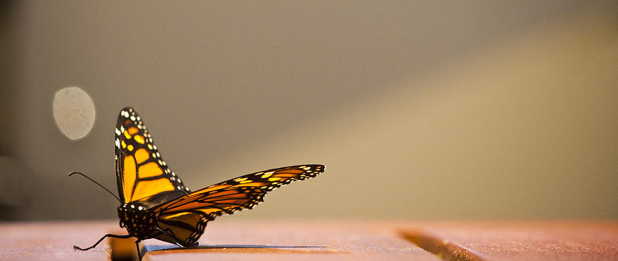 Butterfly Photograph - Butterfly by Paul Robb