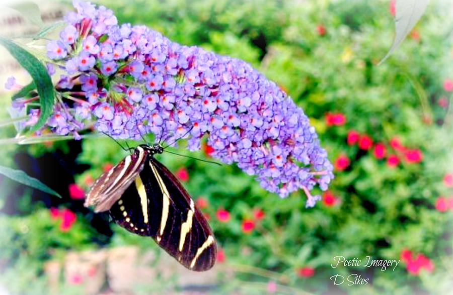 Butterfly Photograph - Butterfly Plant by Debbie Sikes