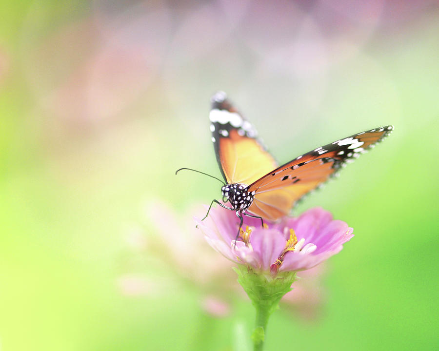 Horizontal Photograph - Butterfly Rainbow by Sharon Lapkin
