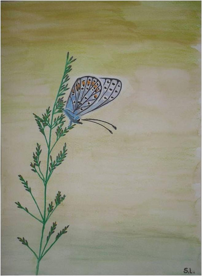 Watercolor Painting - Butterfly by Silvia Louro