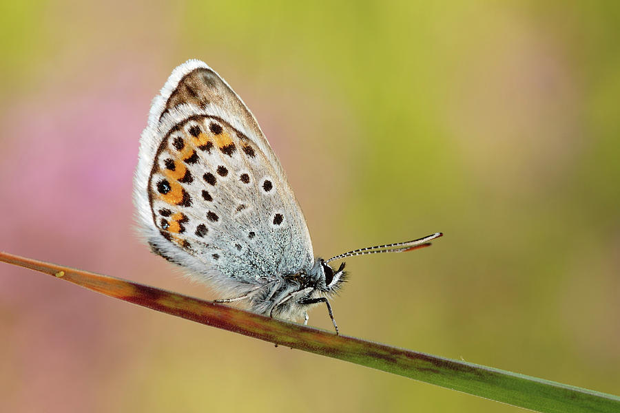 Horizontal Photograph - Butterfly by Stefady