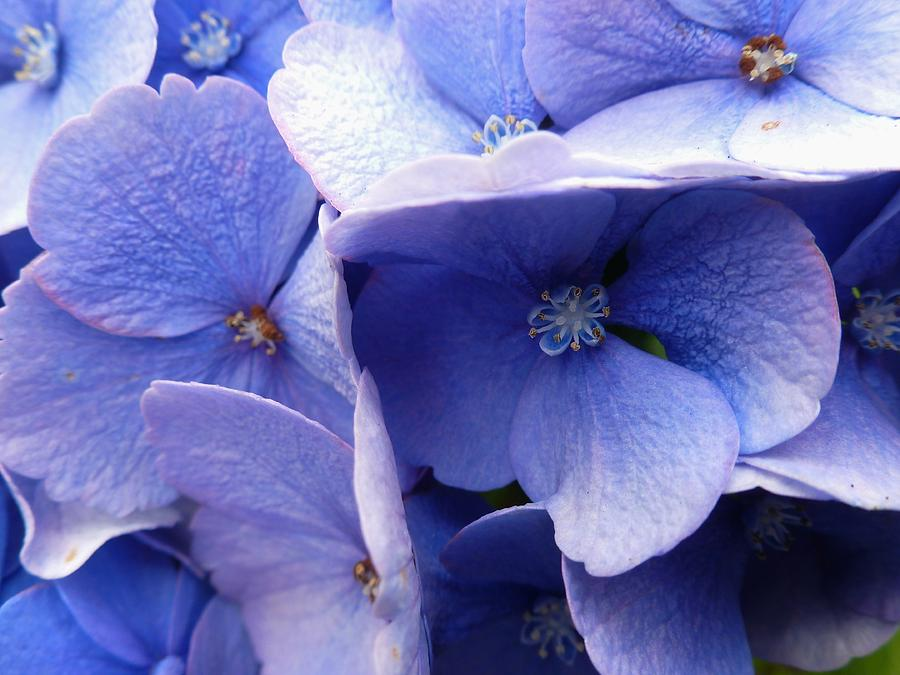 Blue Photograph - Butterfly Wing Blue Flowers by Christine Burdine