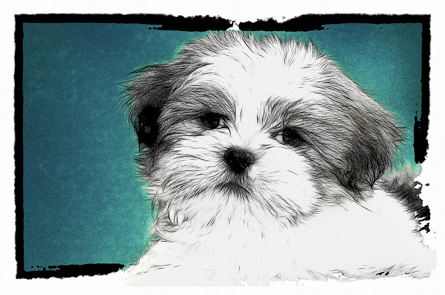 Puppy Digital Art - Button Nose by Tilly Williams