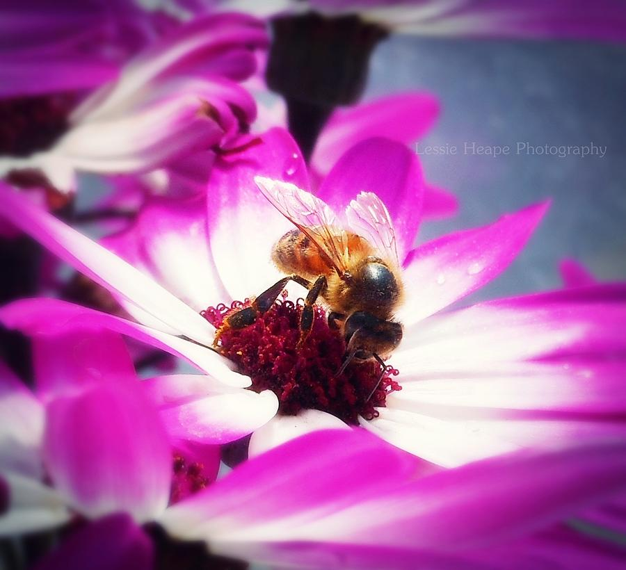 Macro Photograph - Buzz Wee Bees Ll by Lessie Heape