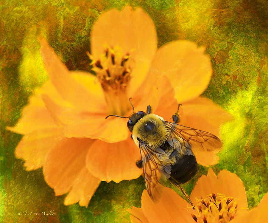 Buzzy The Honey Bee Digital Art By J Larry Walker