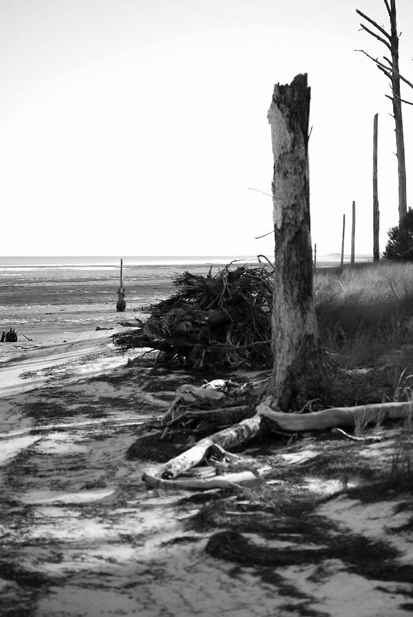 Trees Photograph - Bwhurricane Damage by Judy Hall-Folde