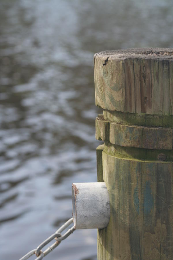Piling Photograph - By The River by Lou Belcher