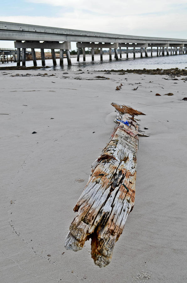 Driftwood Photograph - By The Sea by Brenda Becker