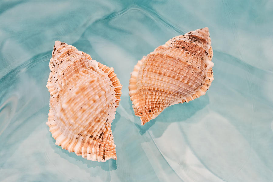 Shell Photograph - By The Sea by Terry Ellis