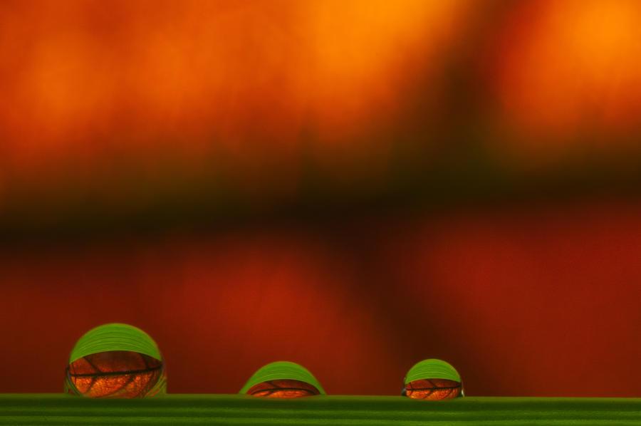 Raindrop Photograph - C Ribet Orbscape Three Perceptions by C Ribet