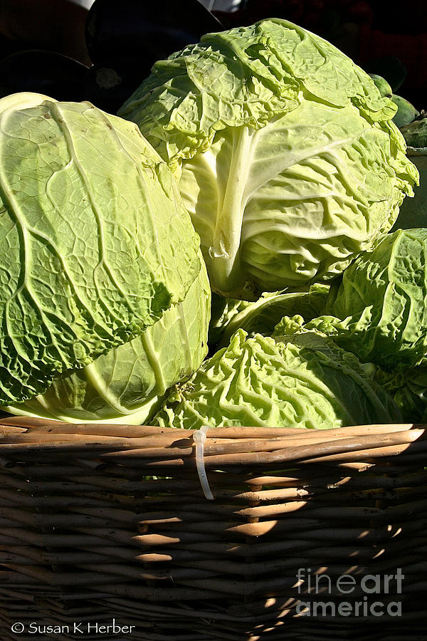 Outdoors Photograph - Cabbage Heads by Susan Herber