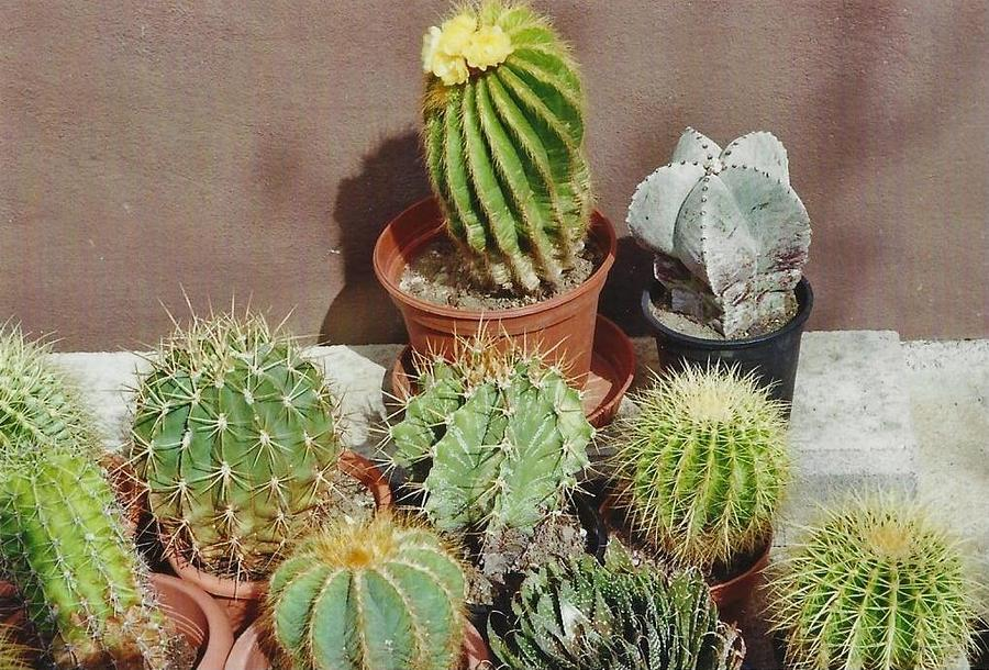 Cacti 1 by Michael Puya