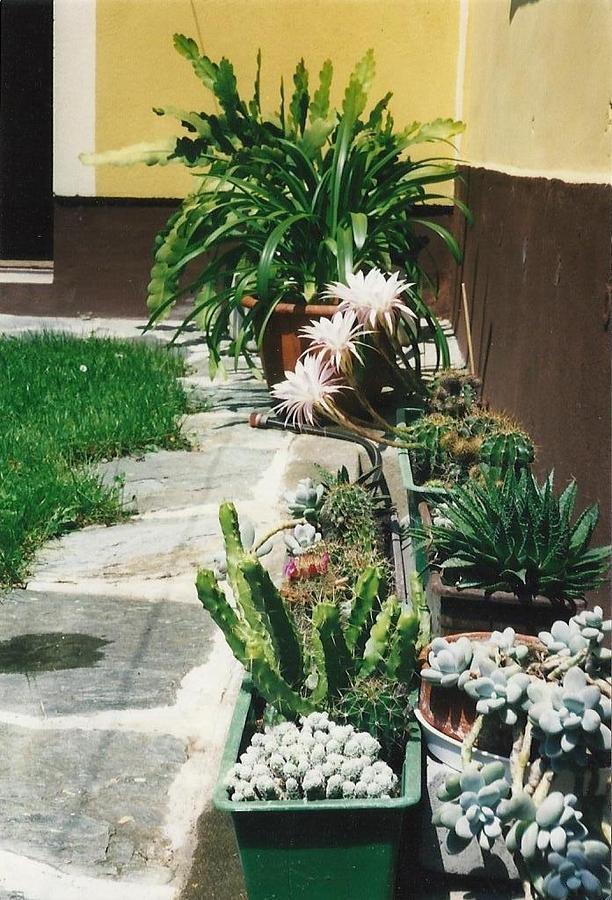 Cacti 2 by Michael Puya