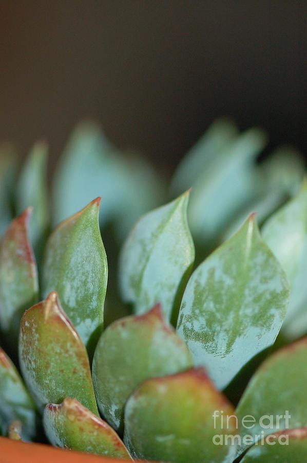 Landscape Photograph - Cactus 2 by Melissa Haley