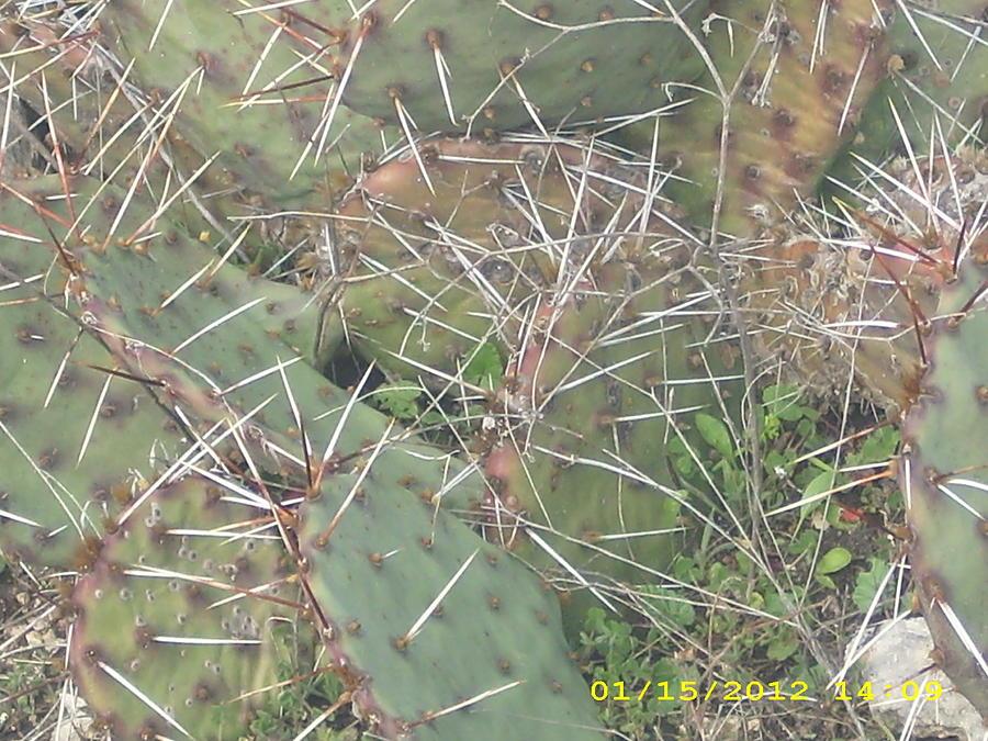 Cactus Photograph by Anna Stearman