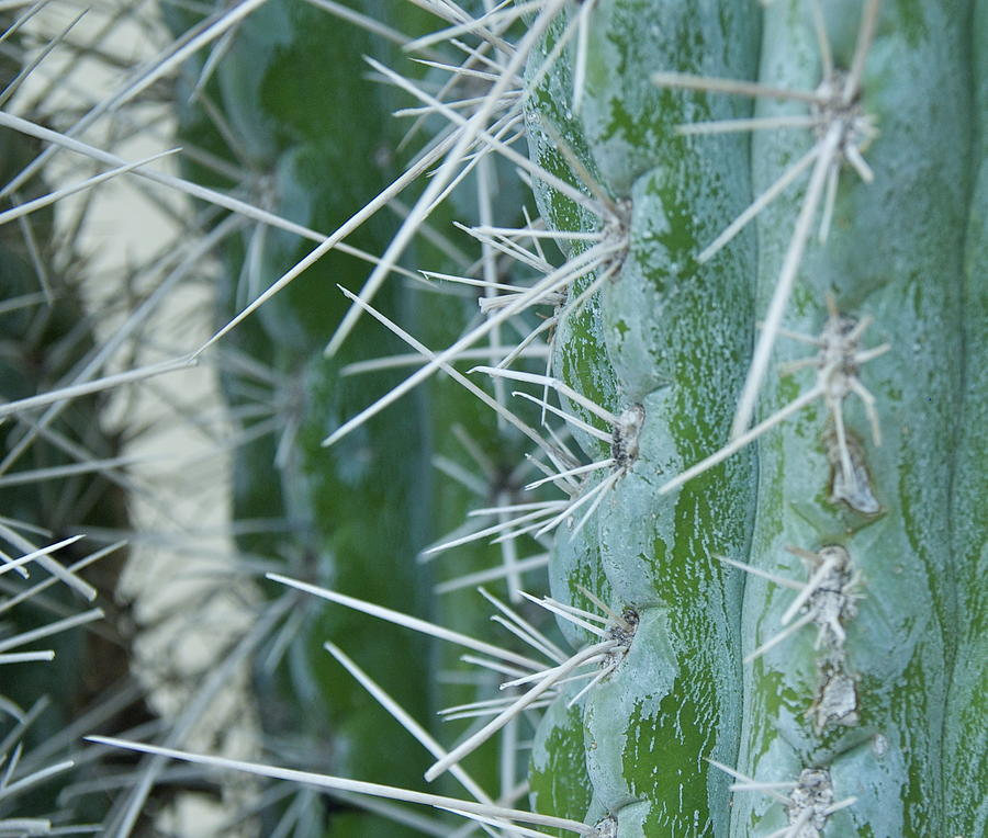 Cactus Photograph - Cactus Close by Dietrich Sauer