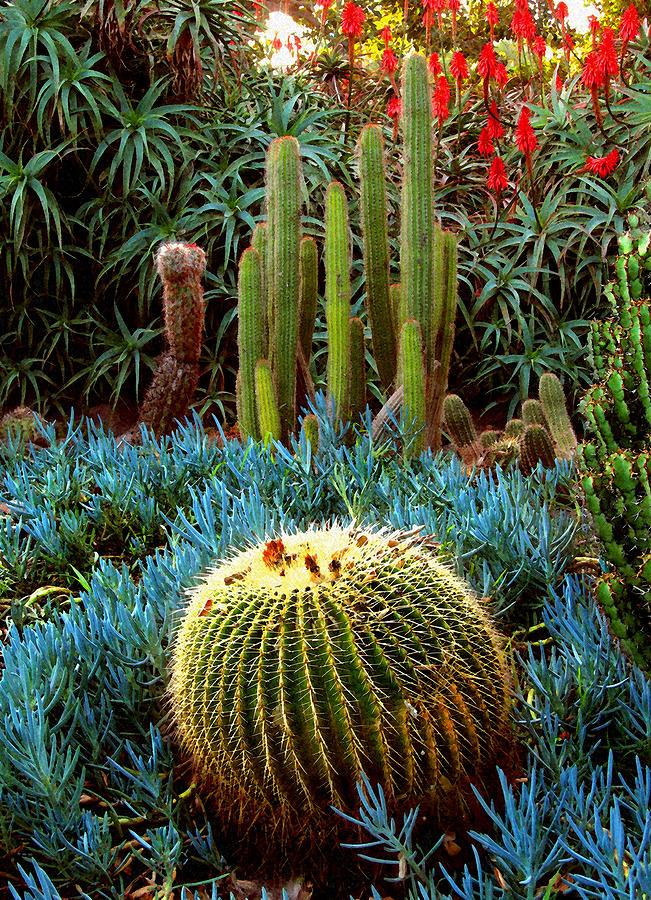Cactus Digital Art - Cactus Gardens by Timothy Bulone