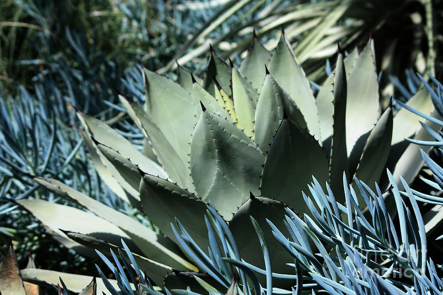 Cactus Photograph - Cactus by Marjorie Imbeau