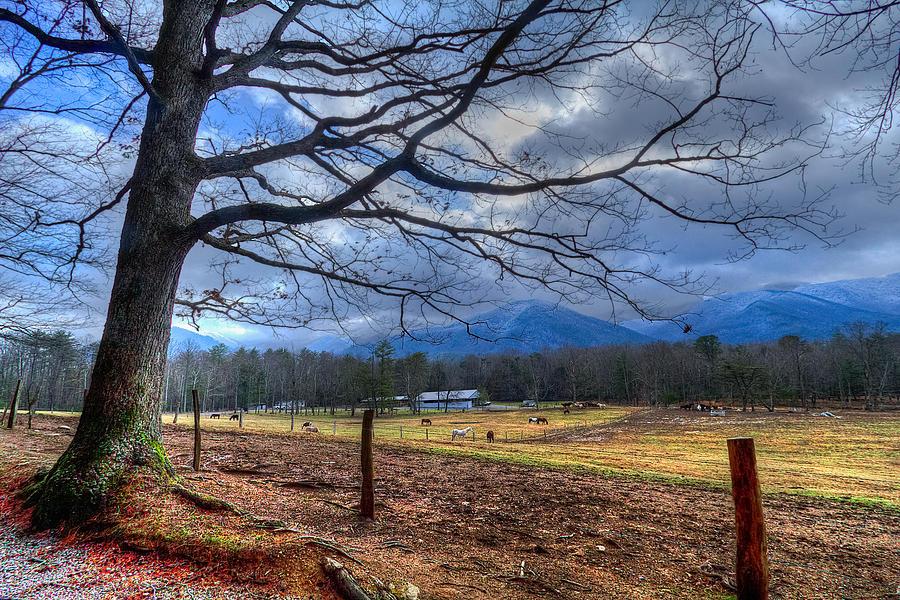 Appalachia Photograph - Cades Cove Lane by Debra and Dave Vanderlaan
