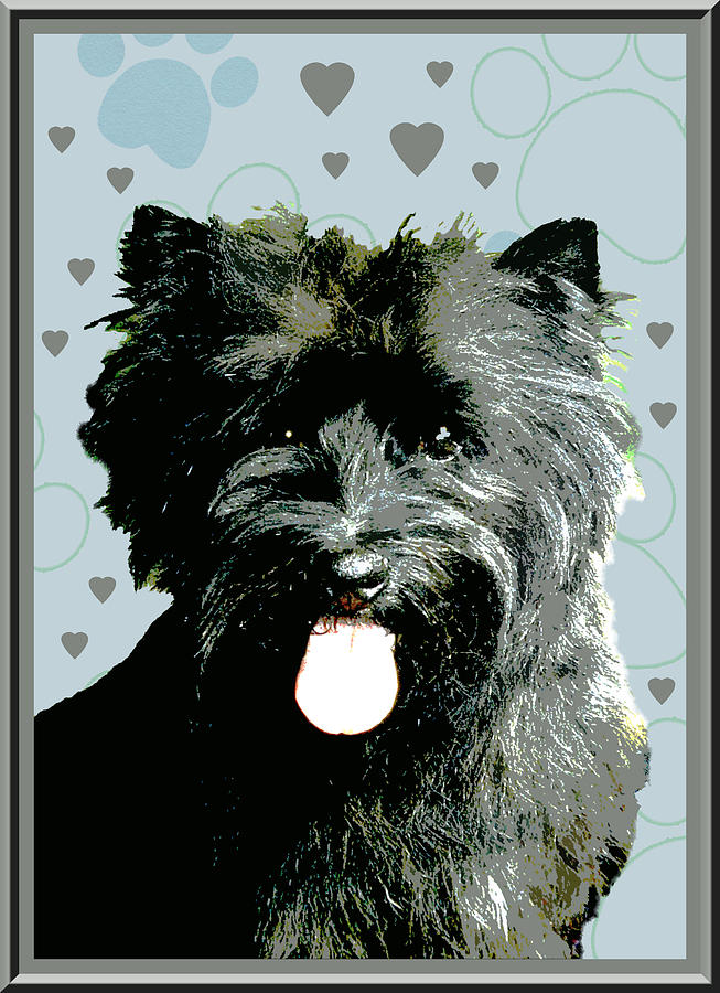 Cairn Terrier Photograph - Cairn Terrier by One Rude Dawg Orcutt