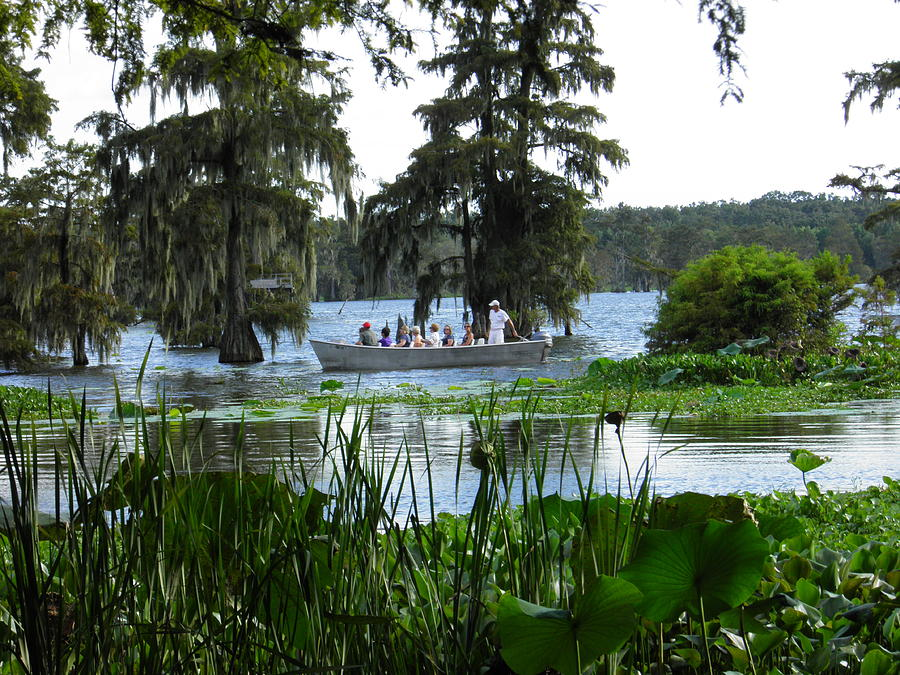 Country Swamp Tour