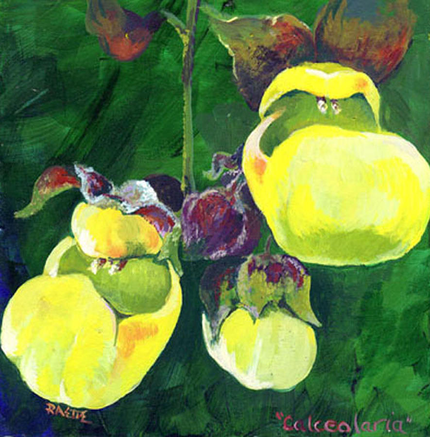 Slipper Flower Painting - Calceolaria by Raette Meredith