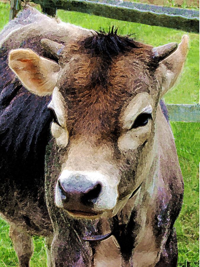 Rural Photograph - Calf Closeup by Susan Savad