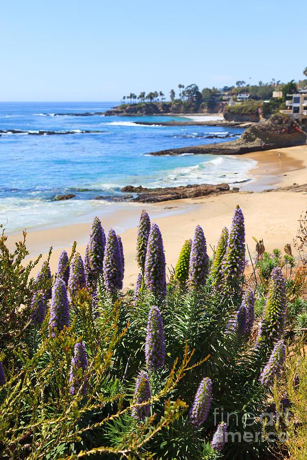 America Photograph - California Coast Flowers Photo by Paul Velgos