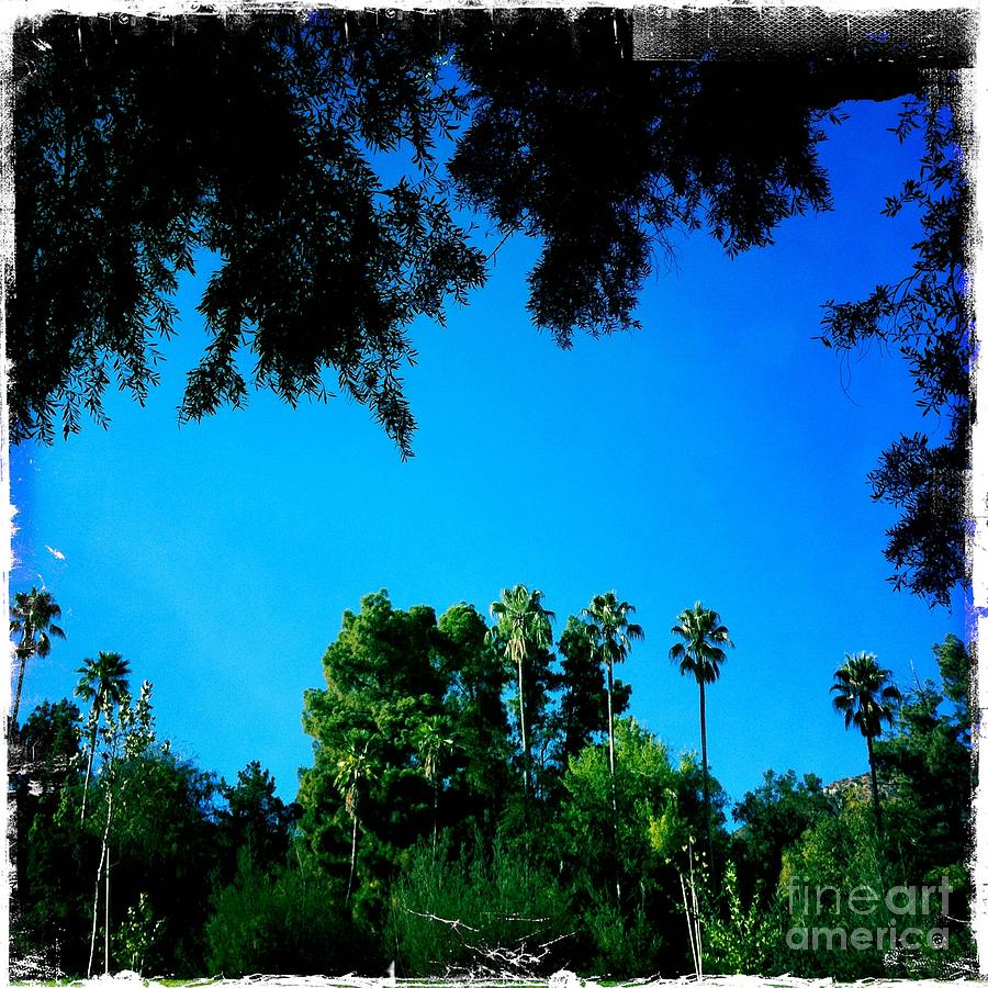 California Dreaming Photograph - California Dreaming by Nina Prommer