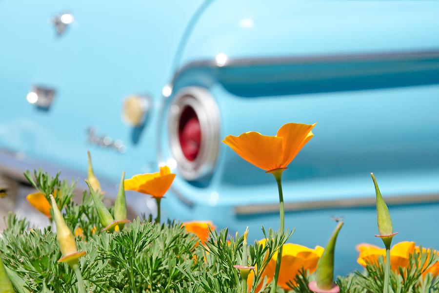 Poppy Photograph - California Poppy by Margaret Pitcher