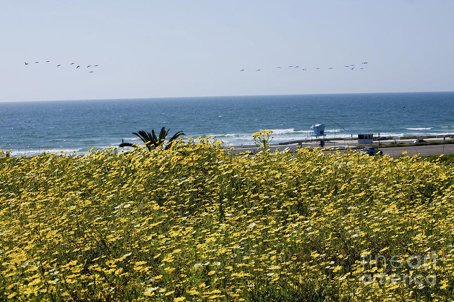 Wildflowers Photograph - California Wildflowers by Daniel  Knighton