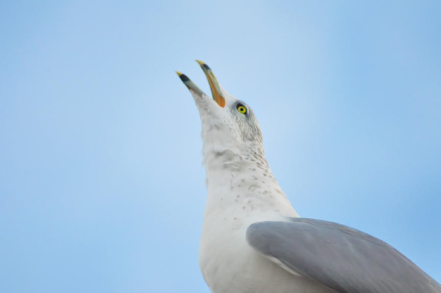 Seagull Photograph - Call Of The Wild by Bill Cannon