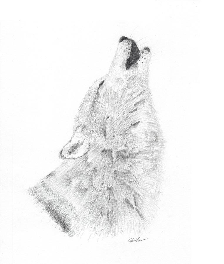 of the wild drawing by daniel crichlow call of the wild drawing by daniel crichlow