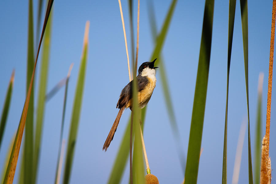 Bird Photograph - Call out by SAURAVphoto Online Store