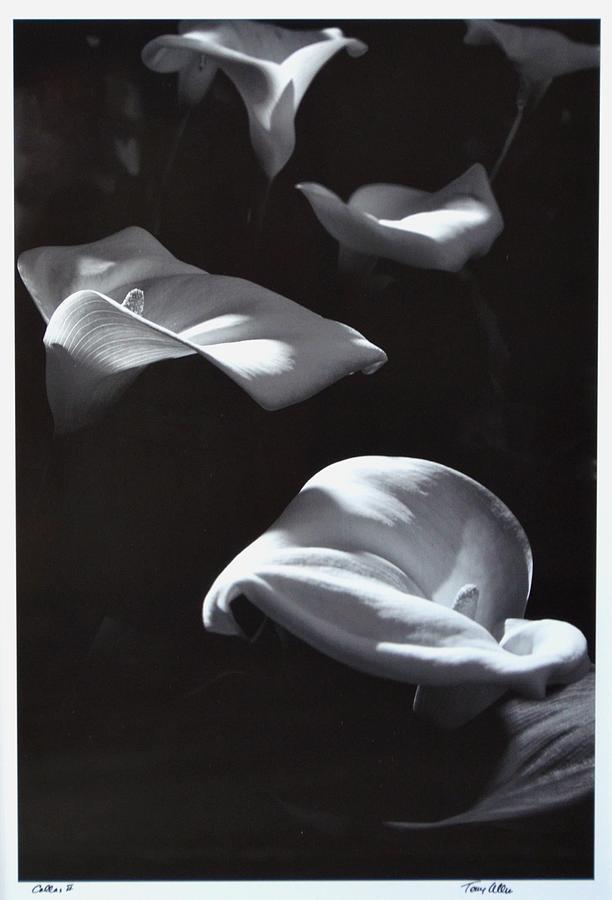 Floral Photograph - Calla 2 by Terry Allen