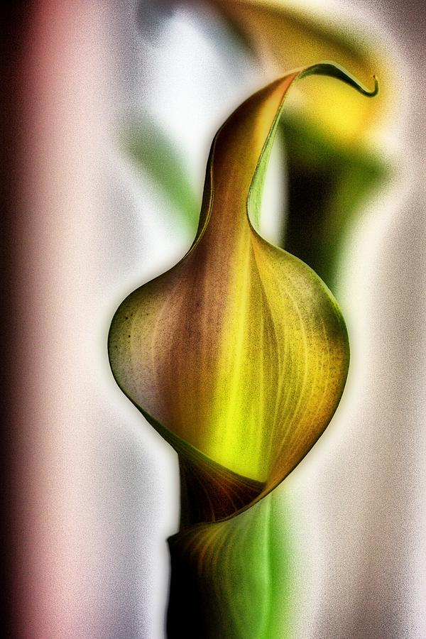Lily Mixed Media - Calla by Jennifer Woodworth