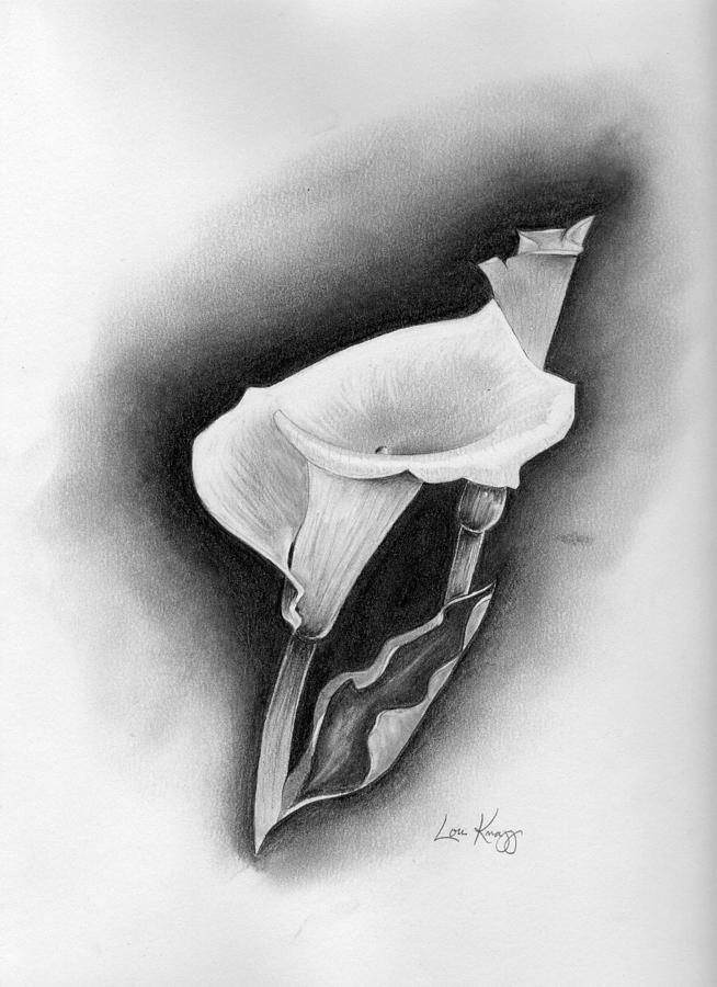 Office Decor Drawing - Calla Lily by Lou Knapp