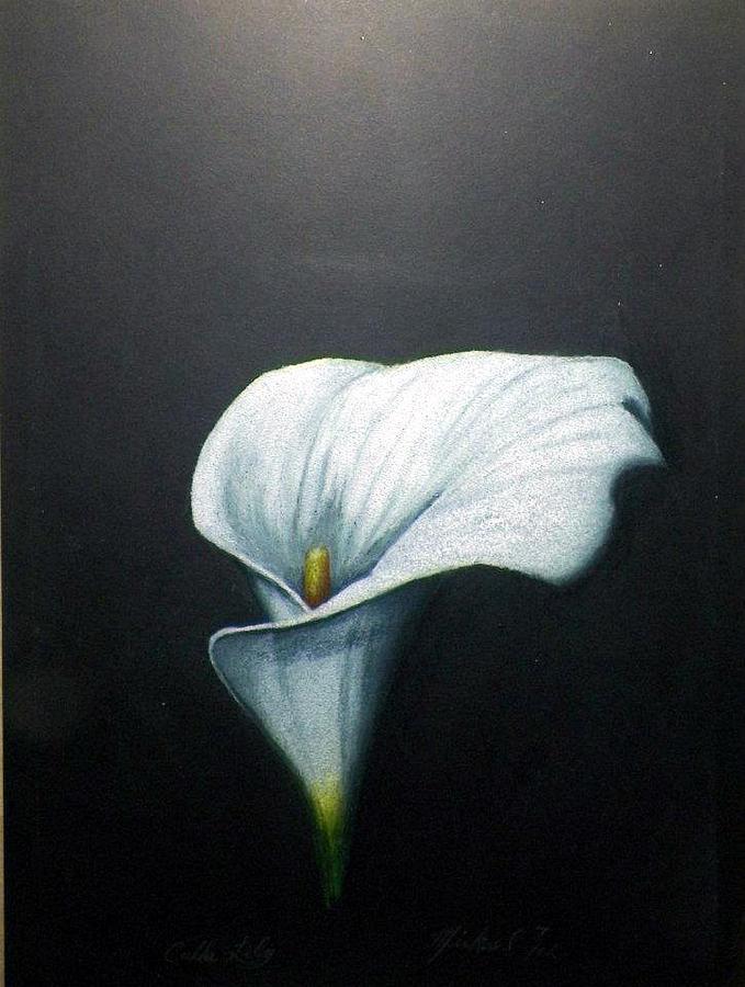 calla drawing calla lily by mickael bruce