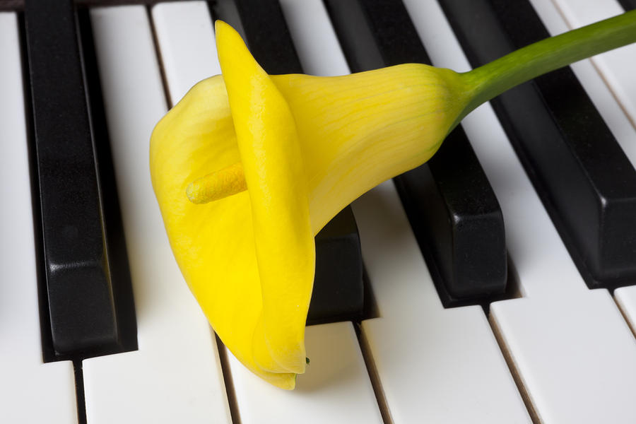 Calla Lily Photograph - Calla Lily On Keyboard by Garry Gay