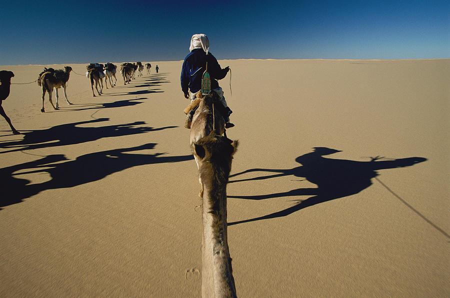 Color Image Photograph - Camel Caravan And Their Shadows by Carsten Peter
