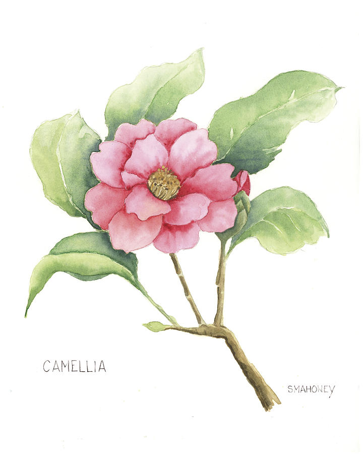 Flower Painting - Camellia by Susan Mahoney