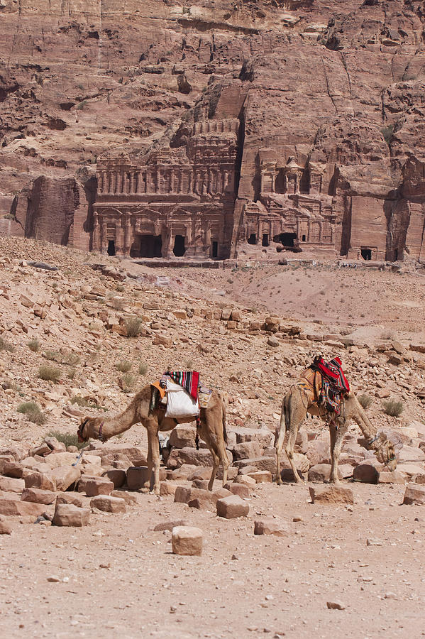 Vertical Photograph - Camels In Front Of The Royal Tombs Petra by Martin Child