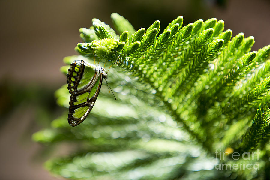 Butterfly Photograph - Camouflage by Leslie Leda
