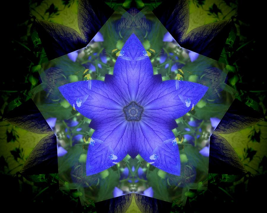 Campanula star flower mandala photograph by rene crystal