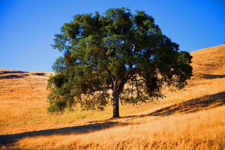 Tree Photograph - Campo Seco Tree by Joe Fernandez